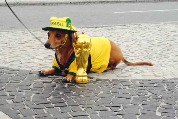 Rio_Dog
